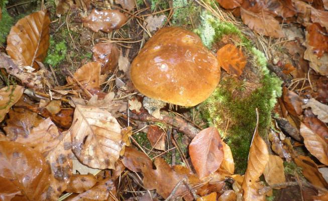 chasse aux champignons